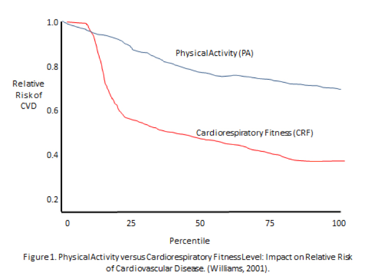 Physical Activity vs. Physical Fitness
